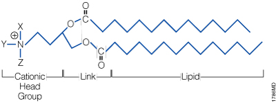 The general structure of a synthetic cationic lipid.