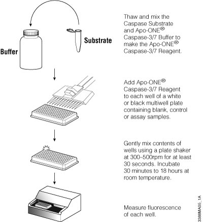 Schematic of Apo-ONE® Assay protocol.
