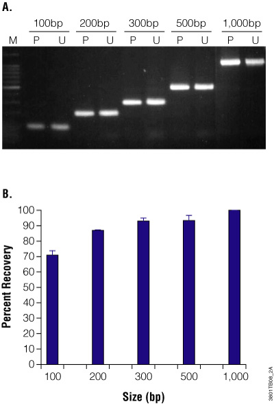 Purification and recovery of PCR products using the Wizard® SV 96 PCR Clean-Up System.