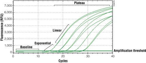 Quantitative PCR amplification curve